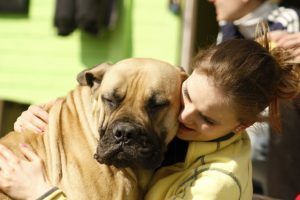 Are Bullmastiffs intelligent and easy to train