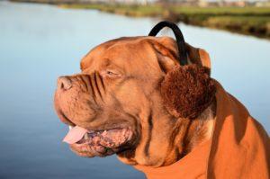 mastiff ear plugs