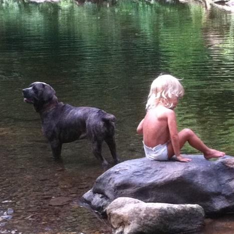 Mastiff and child square