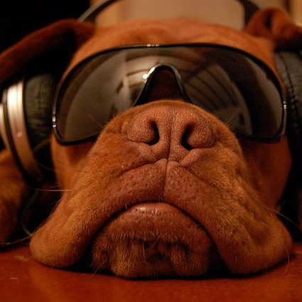 Mastiff in headphones square