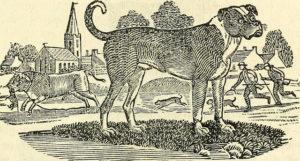 History Mastiff