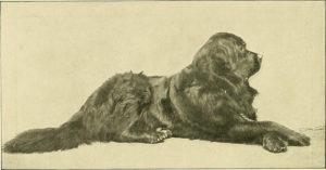 history mastiff lying down