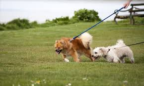 2 dogs on lead