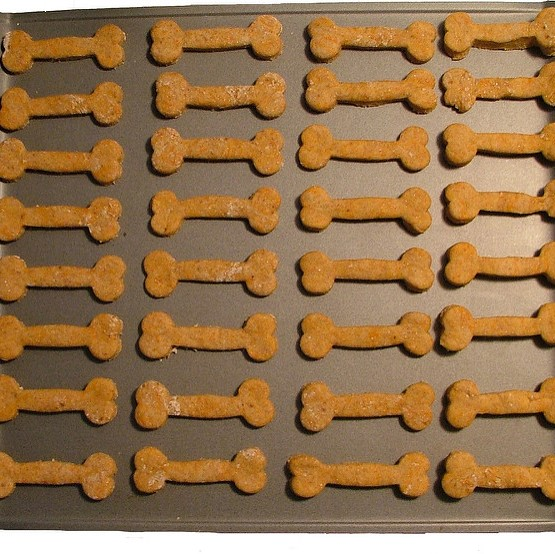 dog biscuit tray square