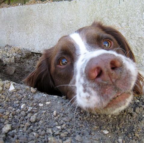 dog dig square
