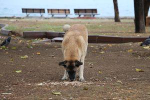 dog eating on ground