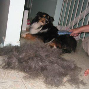 lassie hair square