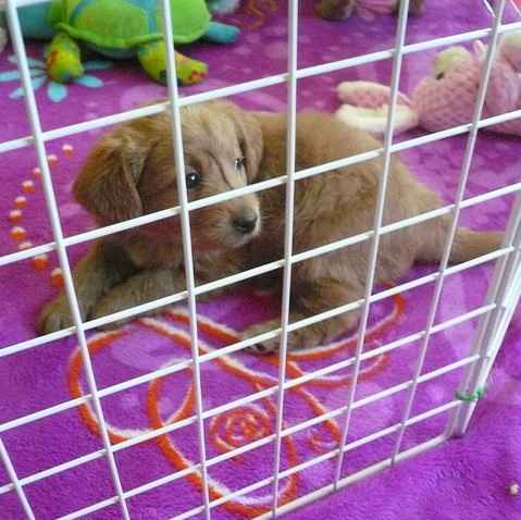 puppy crate square