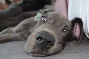 puppy settle