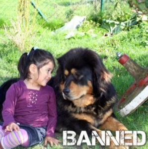 banned tibetan mastiff